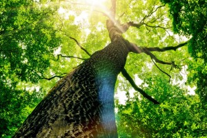Óvd a fákat - környezetvédelmi előadás az Agóra Tudományos Élményközpontban