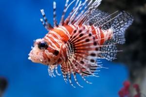 Rendkívüli halak előadás az Agórában